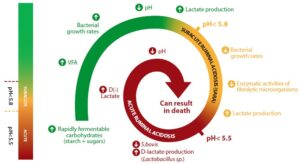 lsc increases rumen pH, reducing the risk of acidosis