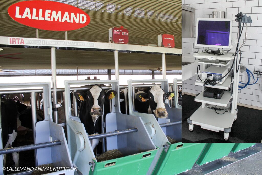 Dairy cow trial at Blanca facilities (Spain) and the medical endoscope used for rumen biopsies