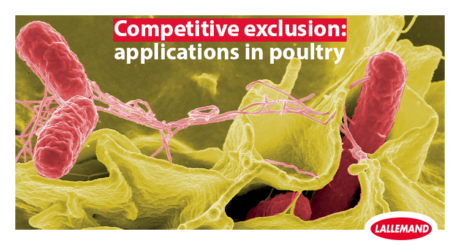 photo of Salmonella Thyphimurium in poultry