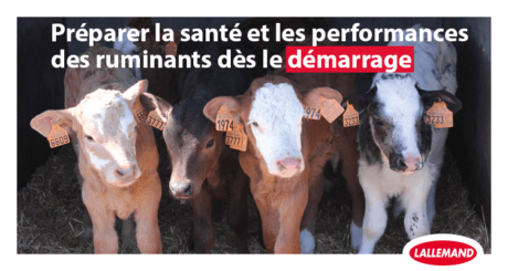photo jeunes ruminants