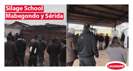 lallemand animal nutrition silage school in spain