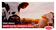 Heat stress: watch out for oxidative stress