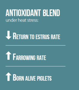 antioxidant blend under heat stress sows