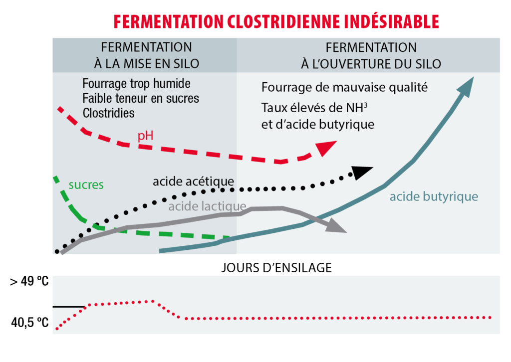 schema ensilage fermentation clostridiene indésirable