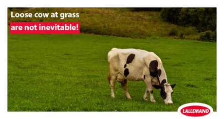 loose cows at grass are not inevitable