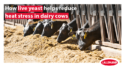 how live yeast helps reduce heat stress in dairy cows