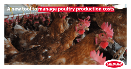 bactocell new poultry production tools