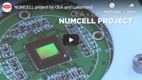numcell project by cea and lallemand