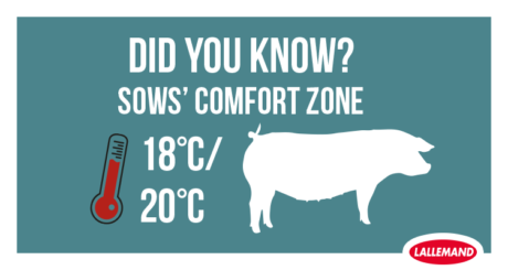 sows confort zone is between 18 and 20 degress