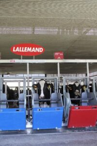 lallemand dairy cows trial
