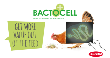 lallemand product bactocell in poultry feed