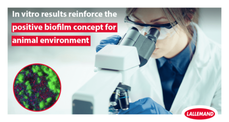 in vitro results reinforce the positive biofilm concept for animal environment