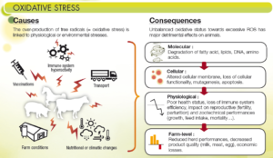 the consequences of oxidative stress