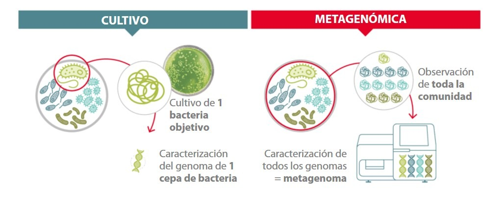 Metagenómica vs. cultivo