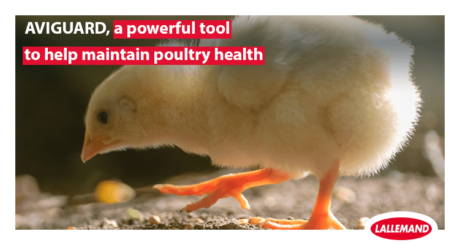 Aviguard, a powerful tool to help maintain poultry health