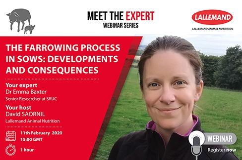 The farrowing process in sows: Developments and consequences webinar