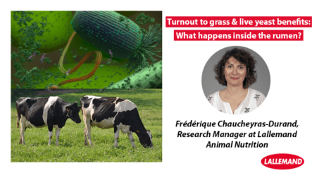 Frédérique Chaucheyras-Durand, Research Manager at Lallemand Animal Nutrition interview Turnout to grass & live yeast benefits: What happens inside the rumen
