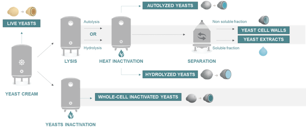 different type of yeast