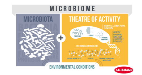 difference between microbiota and microbiome