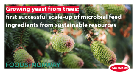 growing yeast from trees
