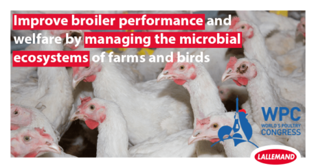 Improve broiler performance and welfare by managing the microbial ecosystems of farms and birds